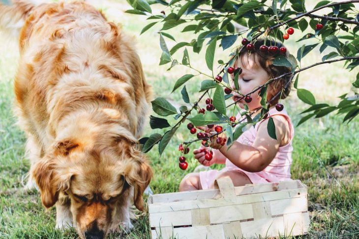 alimentatie sanatoasa copii