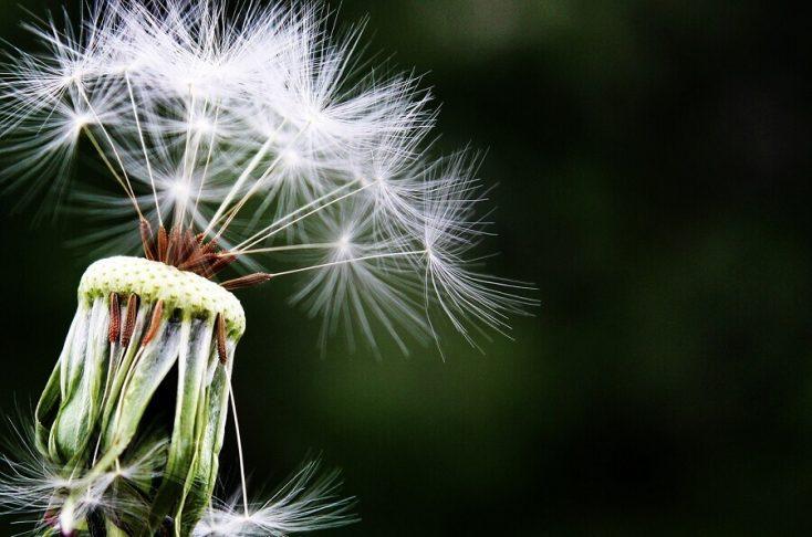 miere de manuka alergii
