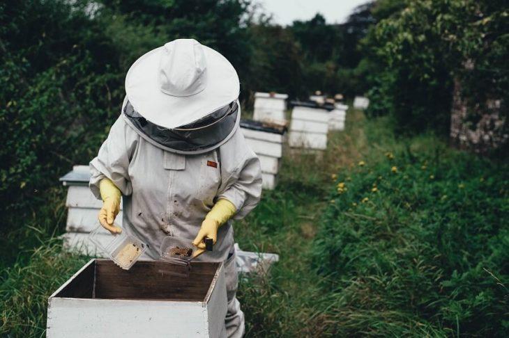 recoltare miere de albine