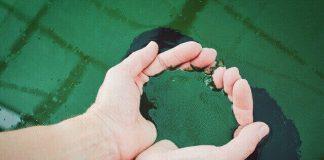 chlorella spirulina alge minune
