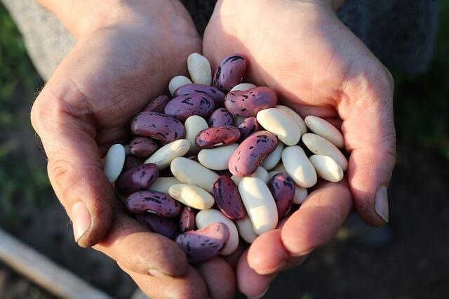 proteine leguminoase