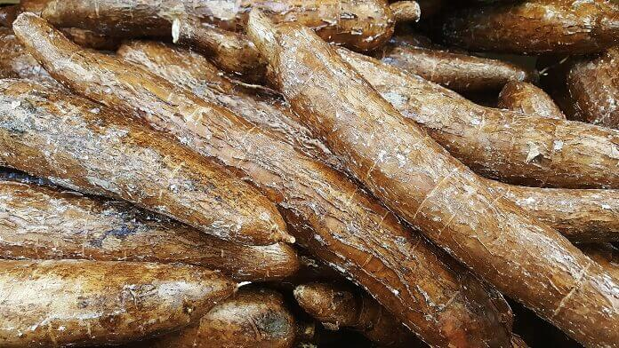 manioc cassava yuca