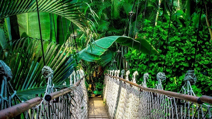 frunze palmieri